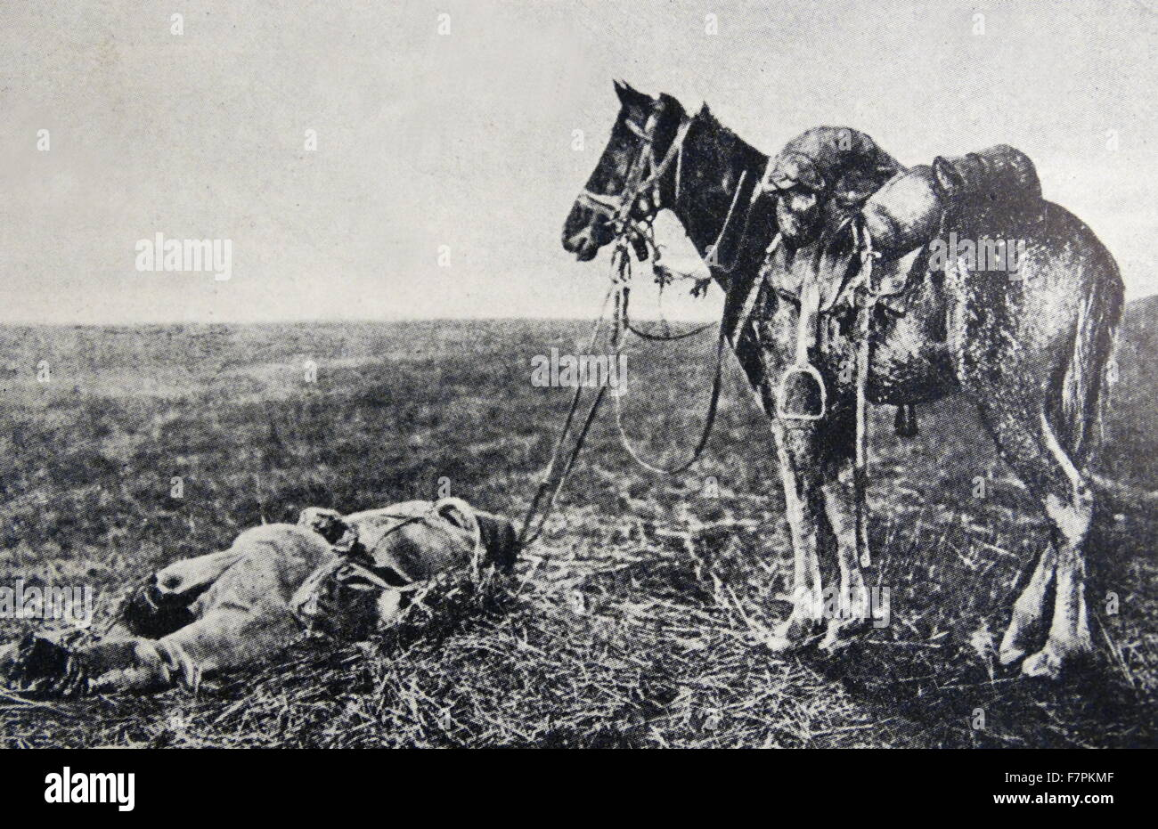 World war one: dead German cavalry soldier lies next to his horse, France 1914 Stock Photo