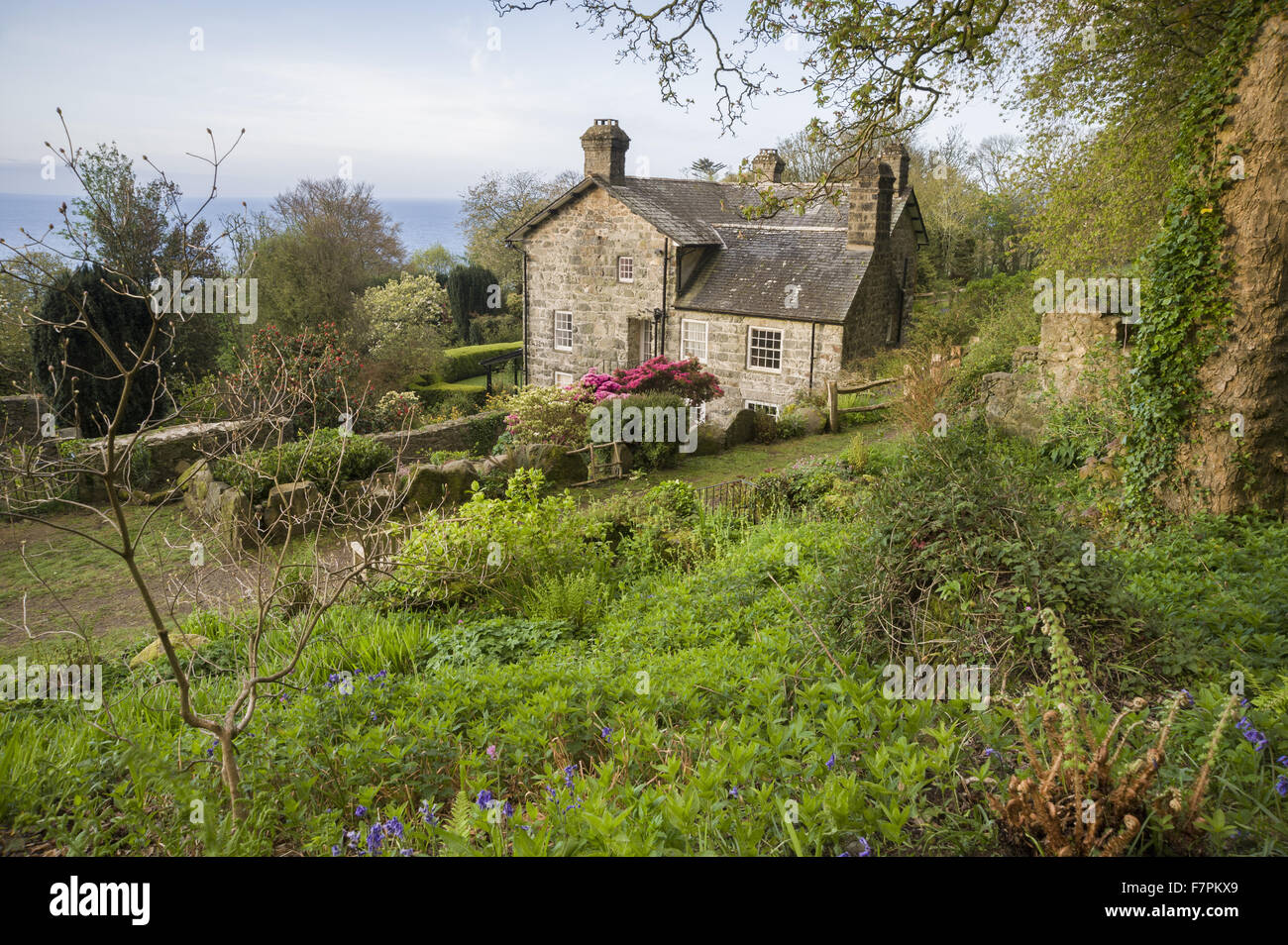 The house, seen from the garden, at Plas yn Rhiw, Gwynedd. The house is framed with bright azaleas and the new leaves Stock Photo