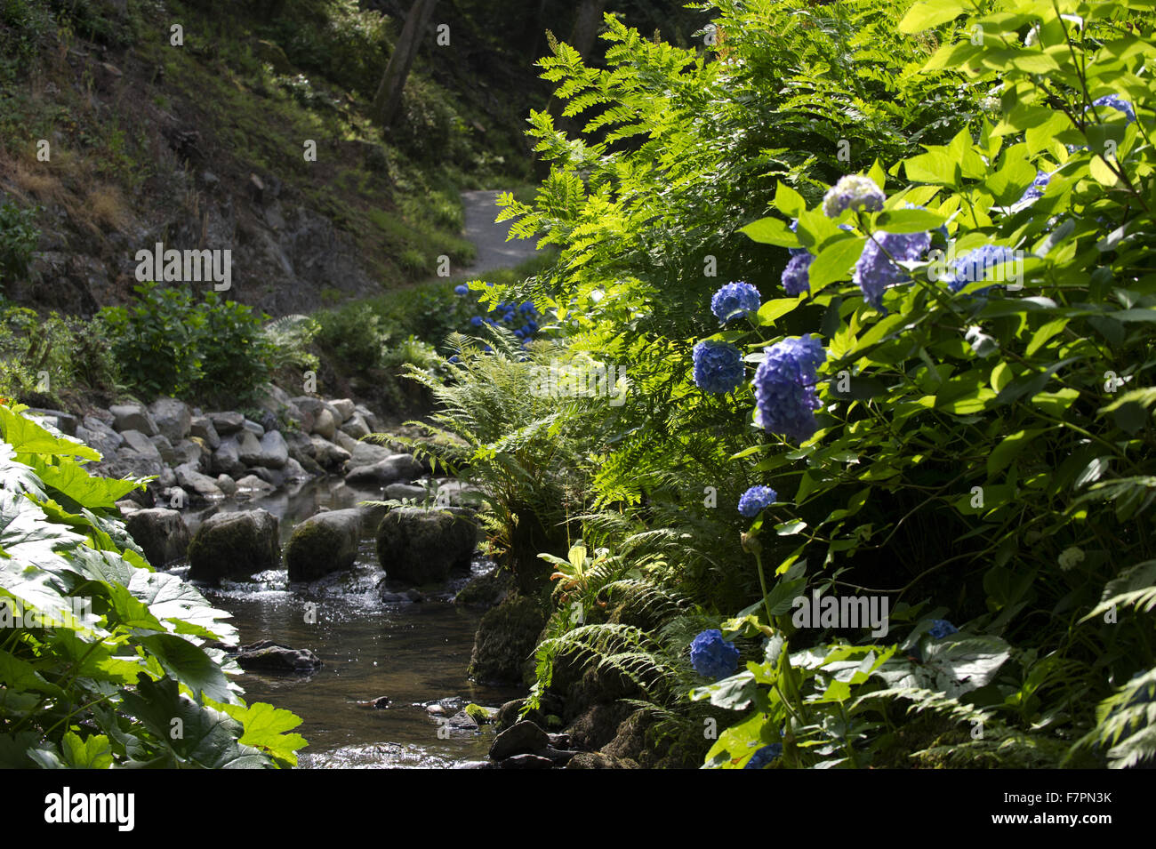 A view of the river in July at Bodnant Garden, Clwyd, Wales. Created by five generations of one family, Bodnant Stock Photo
