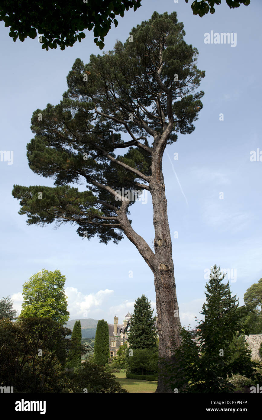 Trees in July at Bodnant Garden, Clwyd, Wales. Created by five generations of one family, Bodnant sits perfectly Stock Photo