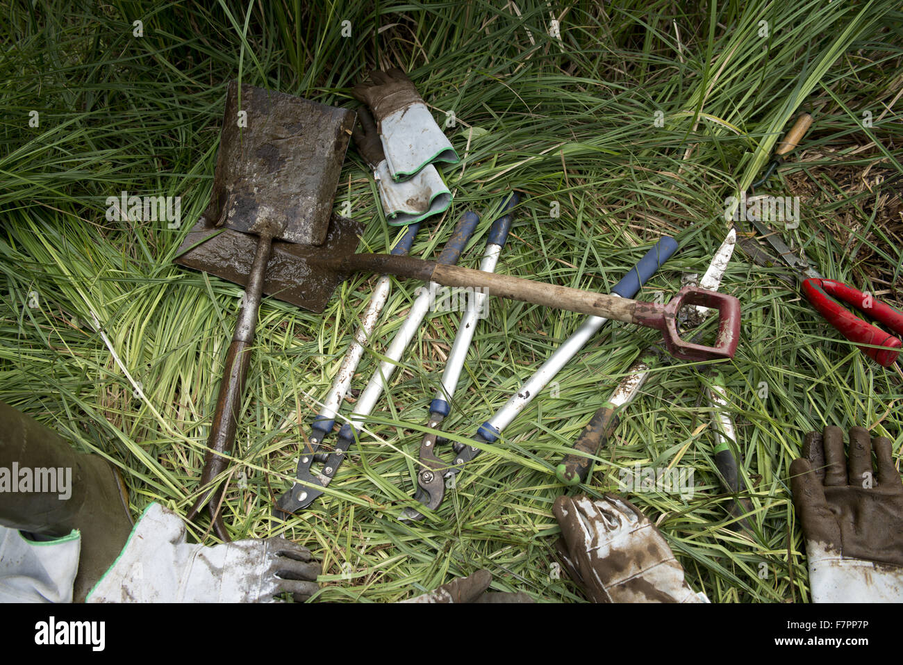 Spades and other tools for use in pond-clearing, Morden Hall Park, London. Stock Photo
