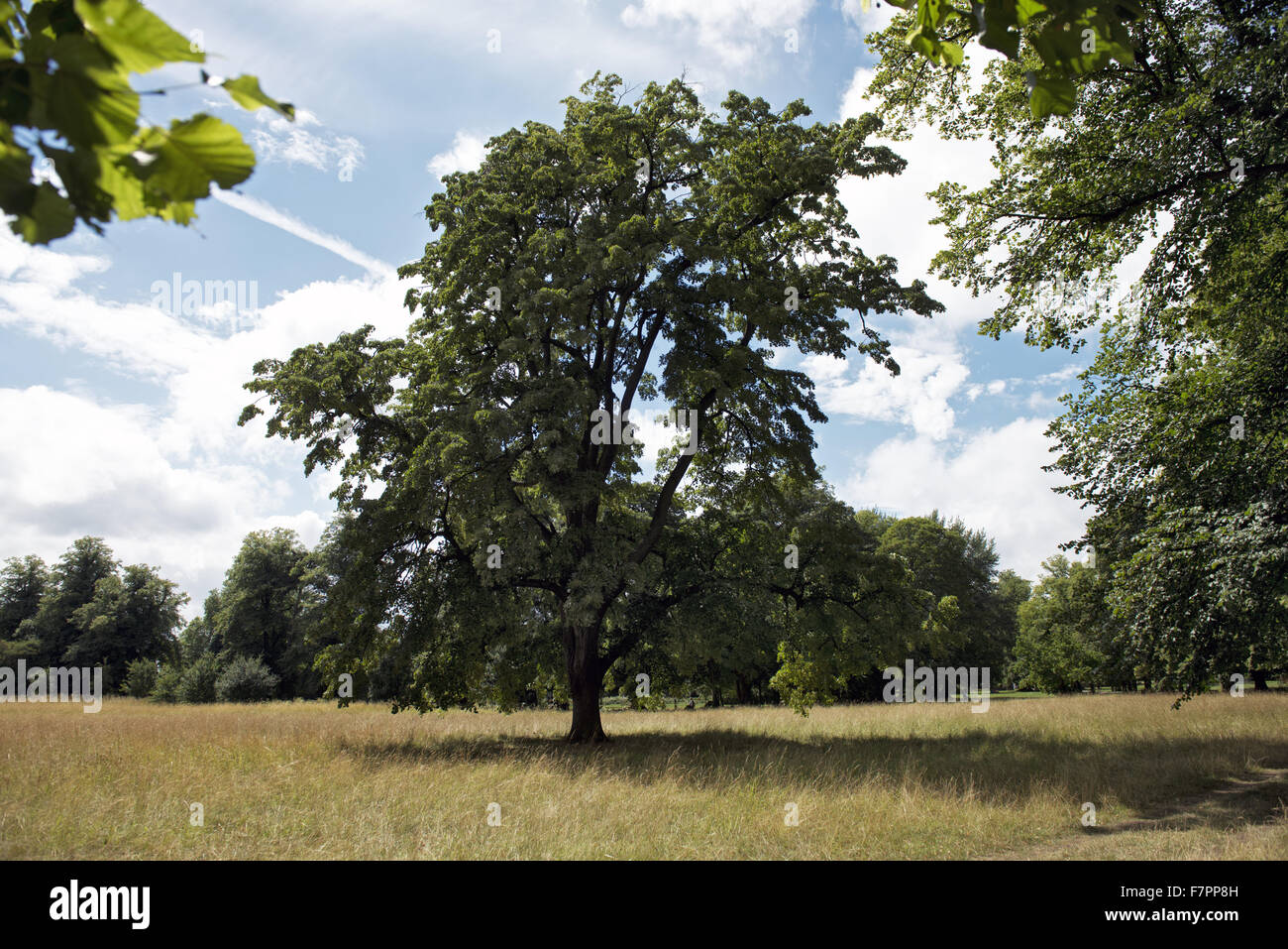 View of the parkland in July, Morden Hall Park, London. Stock Photo