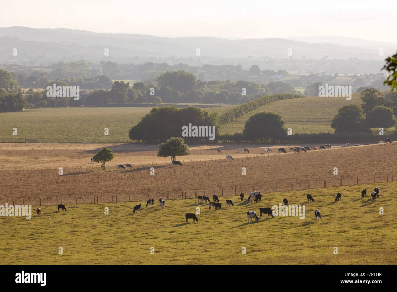 View across fields from the parkland at Killerton, Devon, with Dartmoor seen beyond. - Stock Image