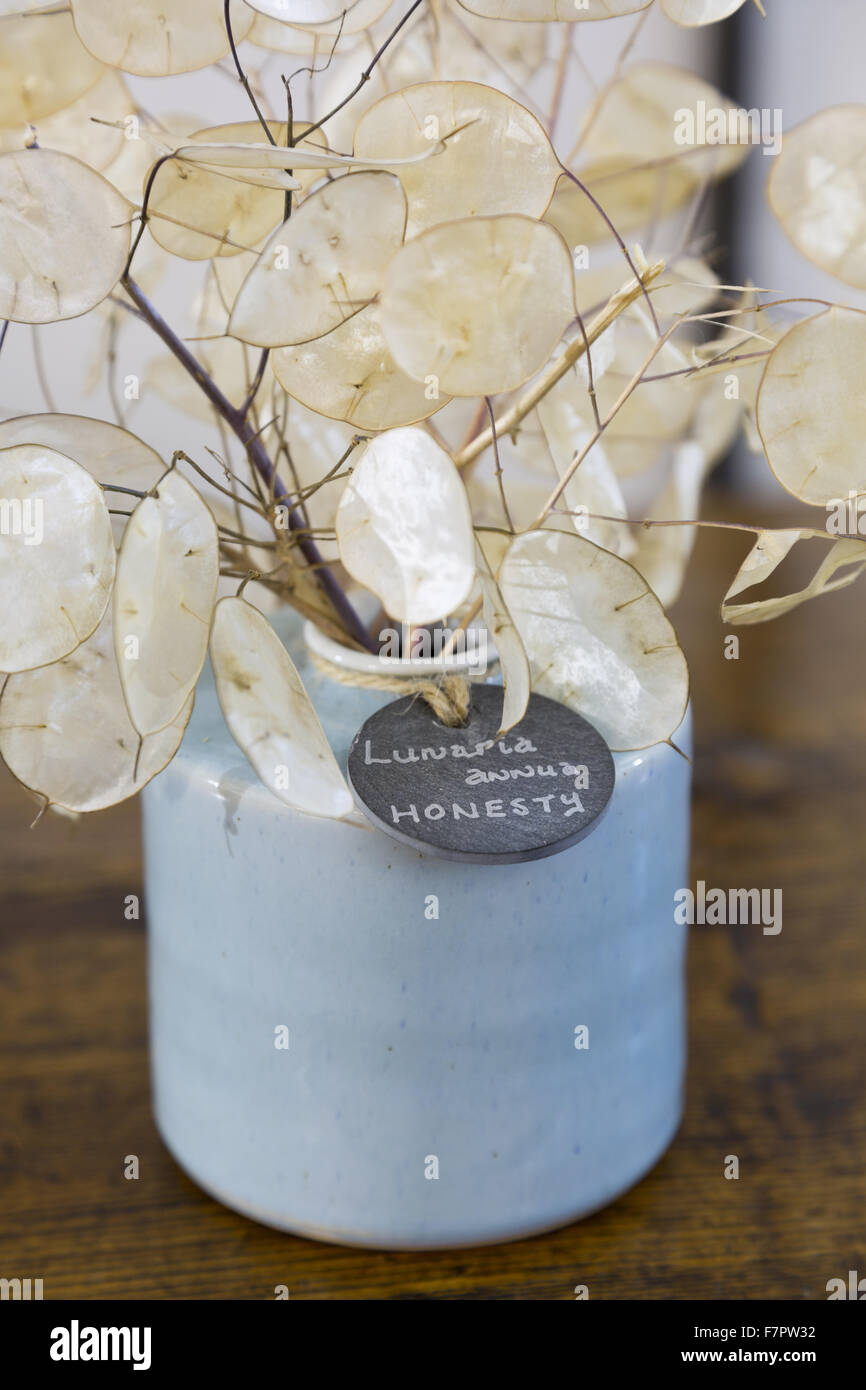 A specially commissioned pot displaying Lunaria annua ('honesty'), one of the plants used in the Christmas Garland Stock Photo