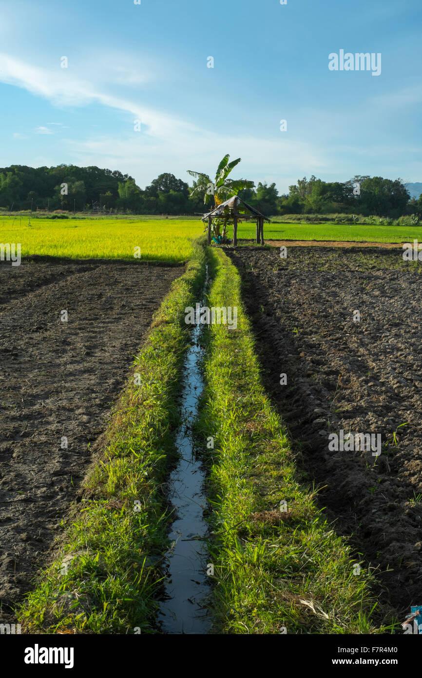 Philippines rice terraces - Stock Image