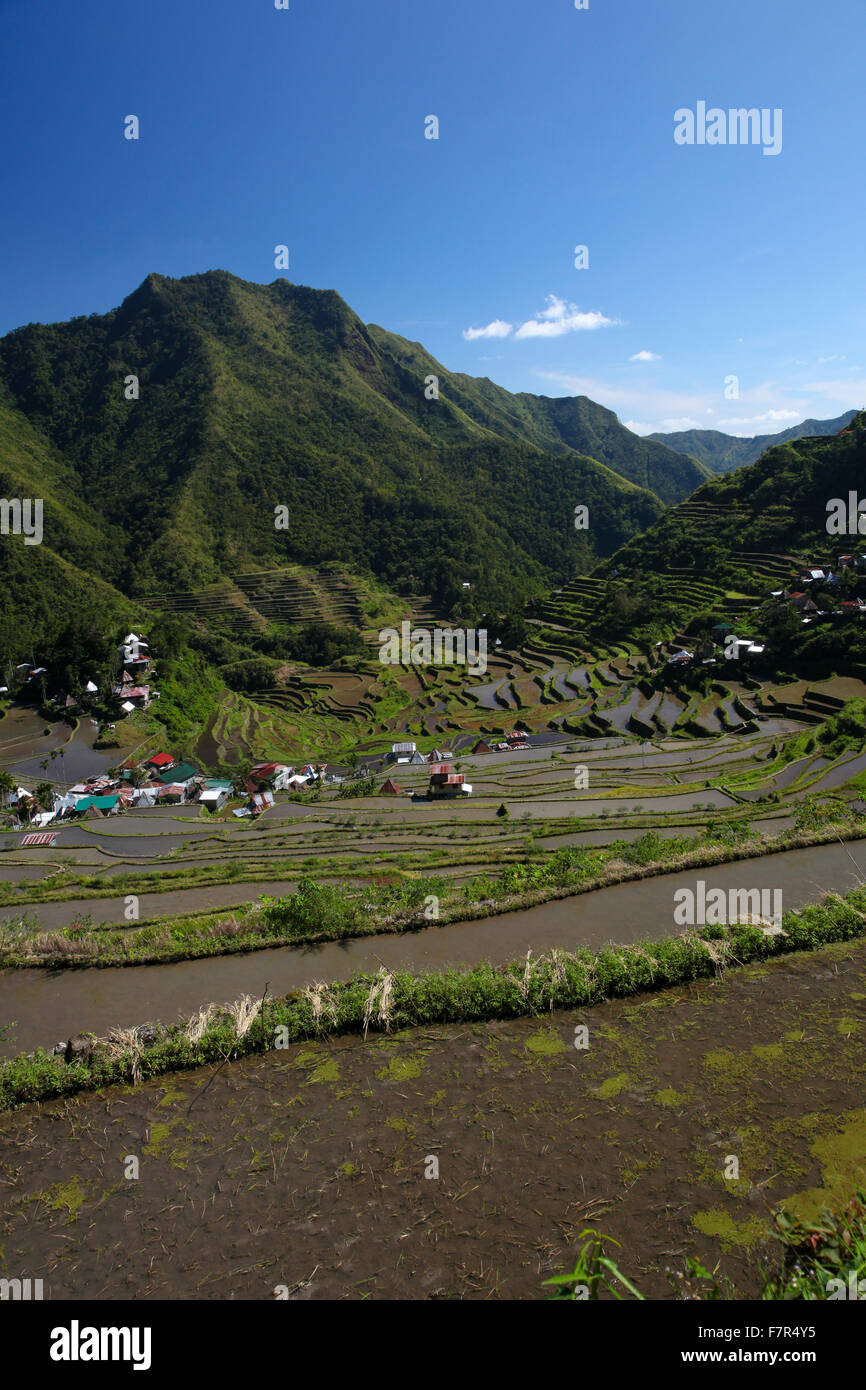 UNESCO heritage rice terraces in Batad Philippines - Stock Image
