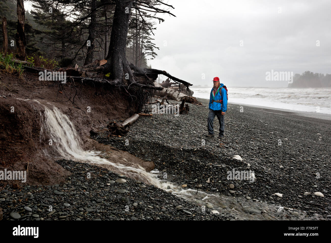 WASHINGTON - Hiker discovering a small waterfall as a creek tumbles off the hillside onto Rialto Beach on the Pacific Stock Photo