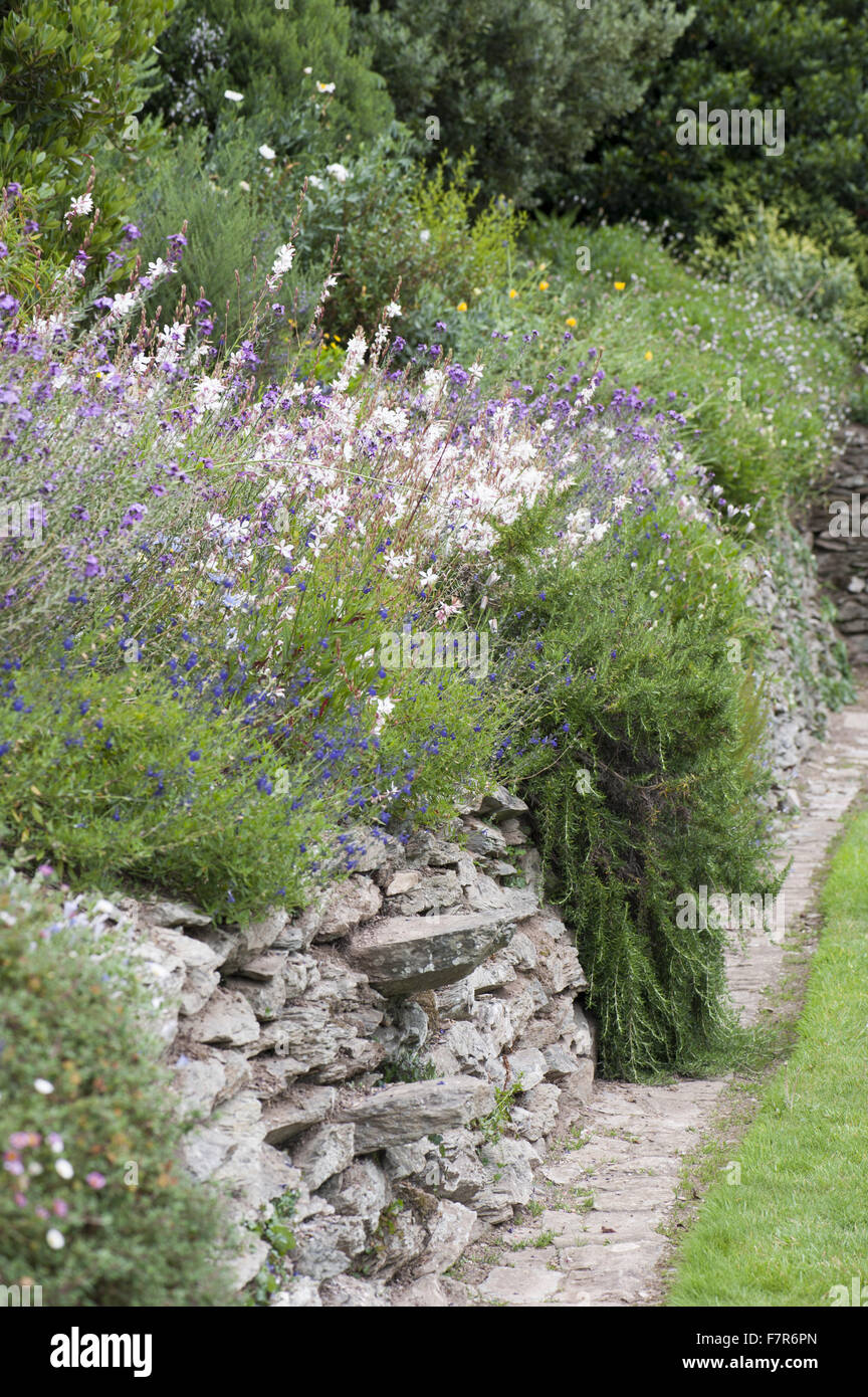 Border beside the Bowling Green lawn with gaura, salvias, erysimum and rosemary at Coleton Fishacre, Devon. The - Stock Image