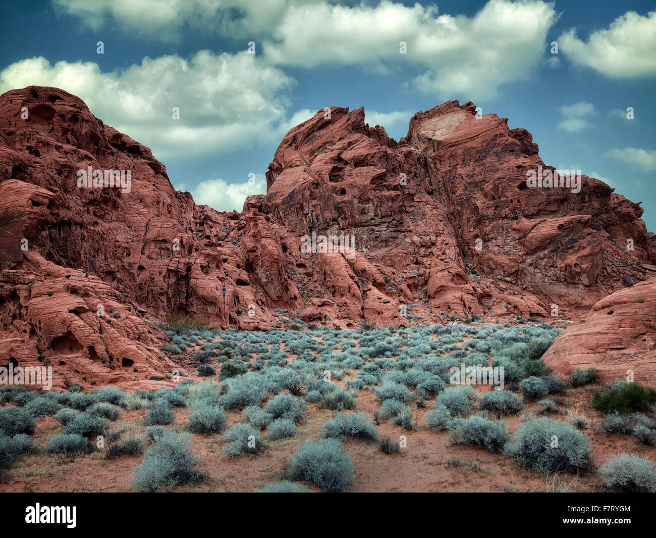Sagebrush and rock formation. Valley of Fire State Park, Nevada - Stock Image