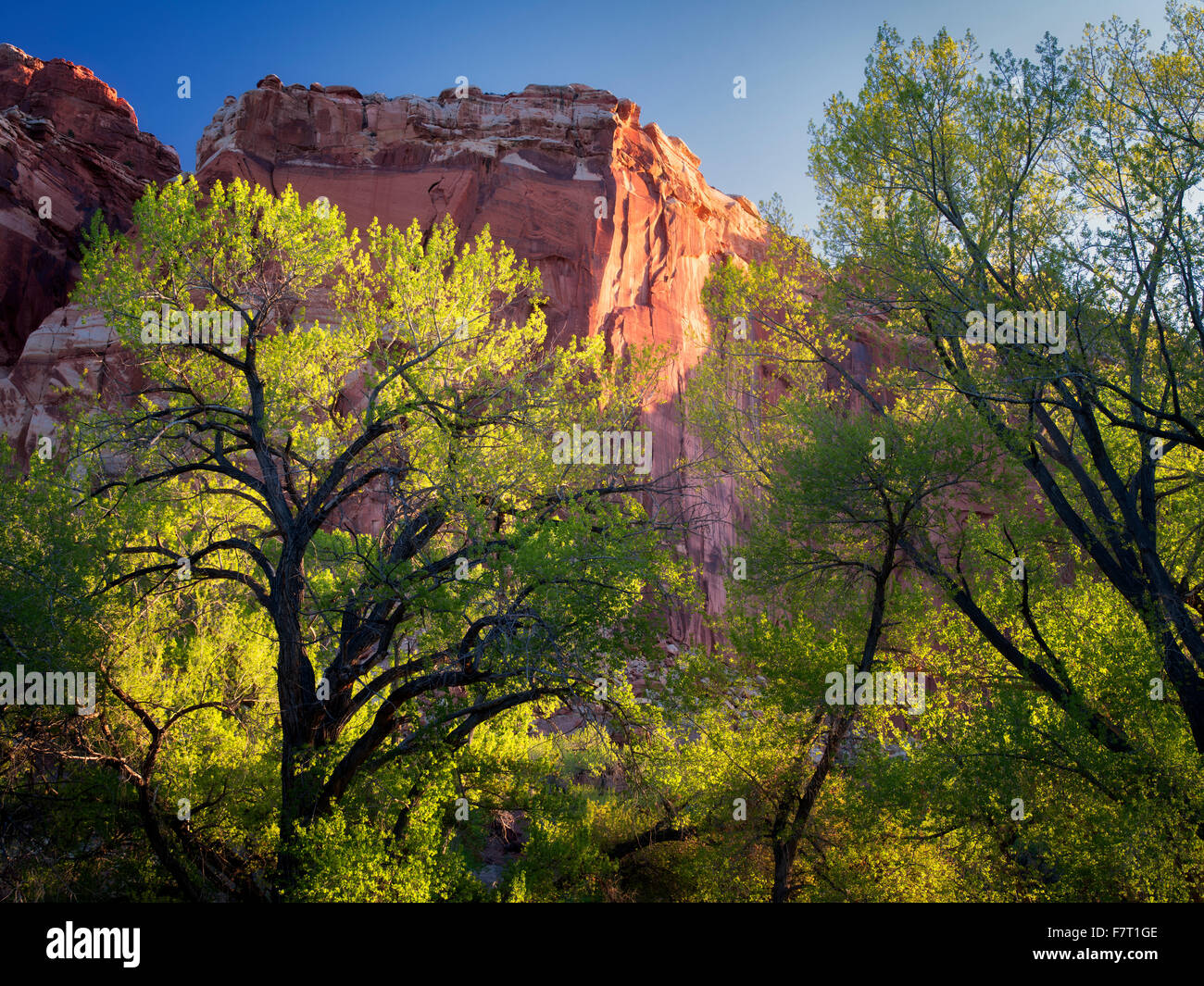 Cottonwood trees and rock formations. Fruita, Capitol Reef National Park, Utah - Stock Image