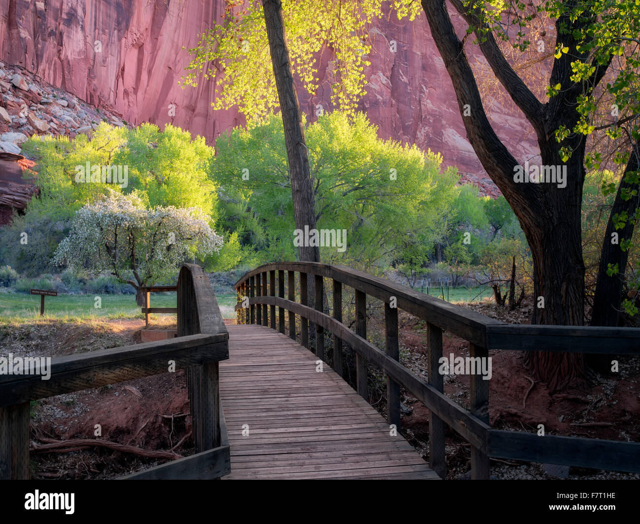 Cottonwood trees and rock formations with bridge at Merin Smith Place. Fruita, Capitol Reef National Park, Utah, - Stock Image