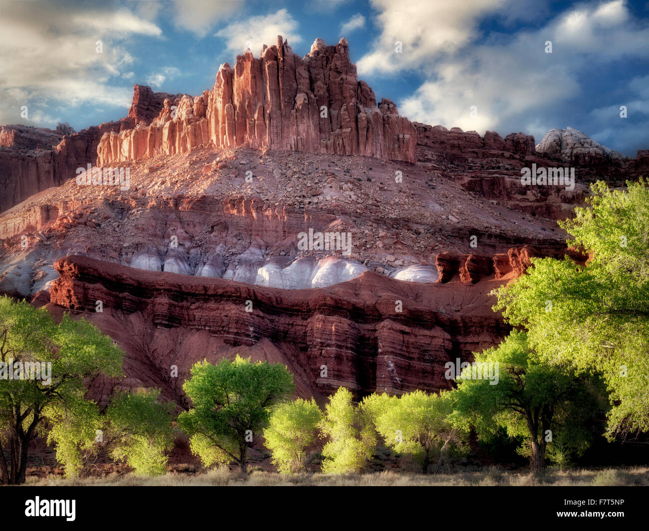 The Castle with cottonwood trees with new spring growth. Fruita, Capitol Reef National Park, Utah - Stock Image