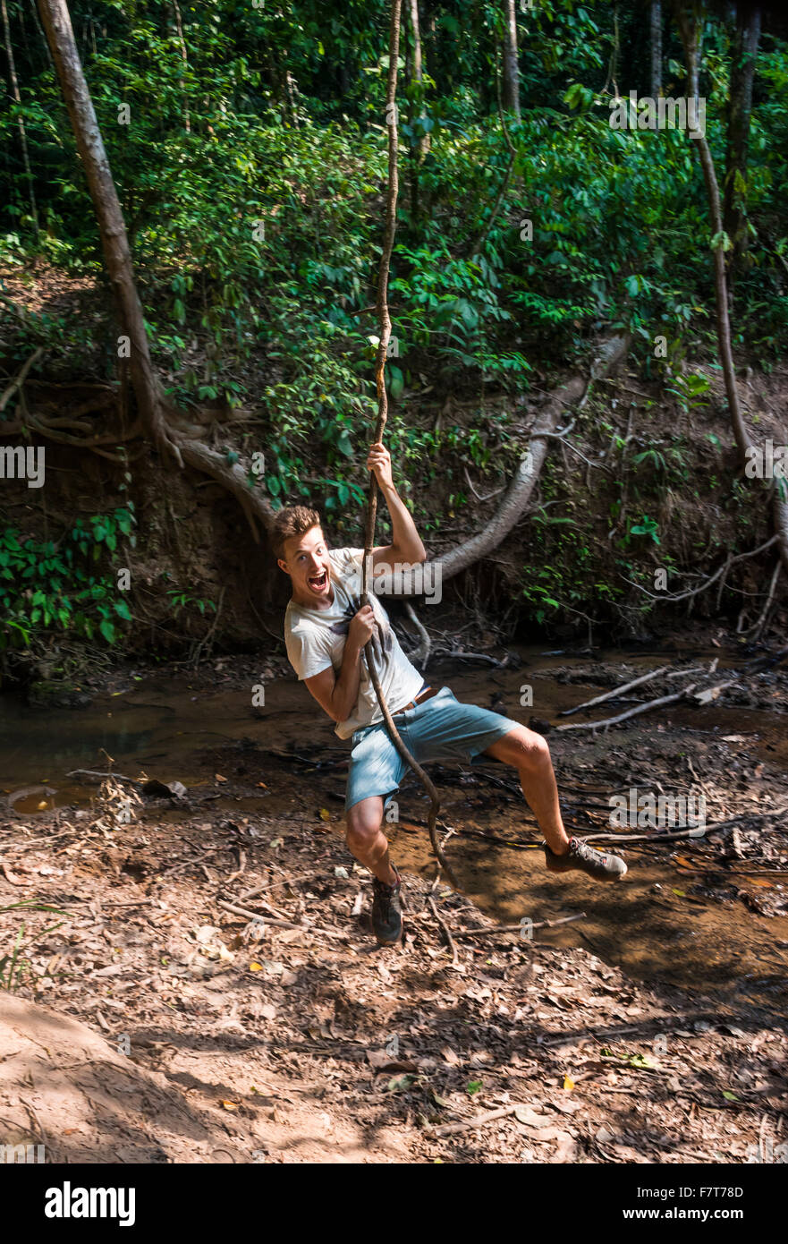 Young man, tourist swinging on a vine in the jungle, tropical rain forest, Taman Negara, Malaysia - Stock Image
