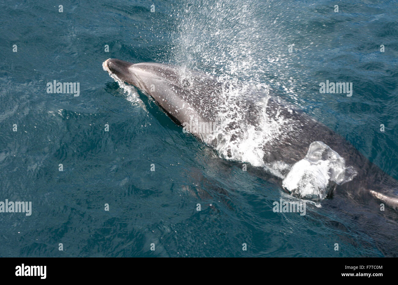 Watching dolphins from the boat by Strait of Gibraltar area, Tarifa, Spain - Stock Image