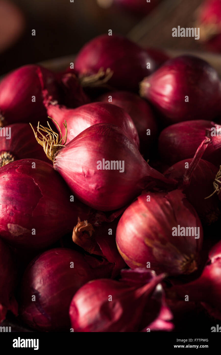 Organic Red Pearl Onions in a Bowl - Stock Image