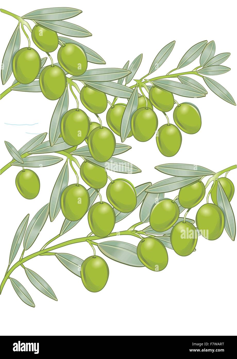 Olives on the tree - Stock Vector