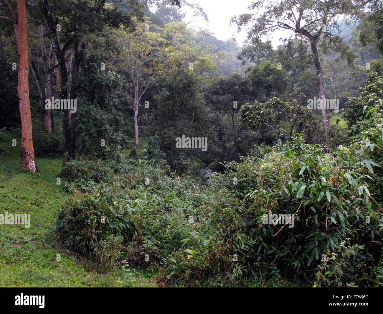 In the Periyar Tiger Reserve, Kerala, India Stock Photo