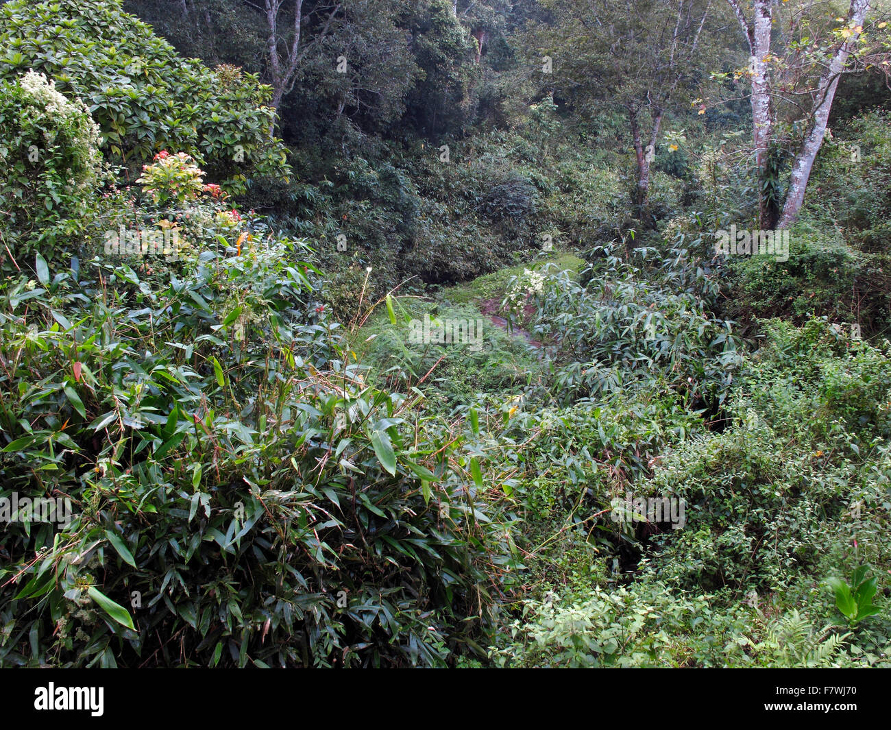 In the Periyar Tiger Reserve, Kerala, India - Stock Image
