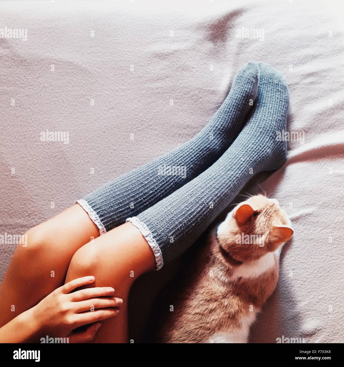 Woman's legs in long socks and cat lying on a bed - Stock Image