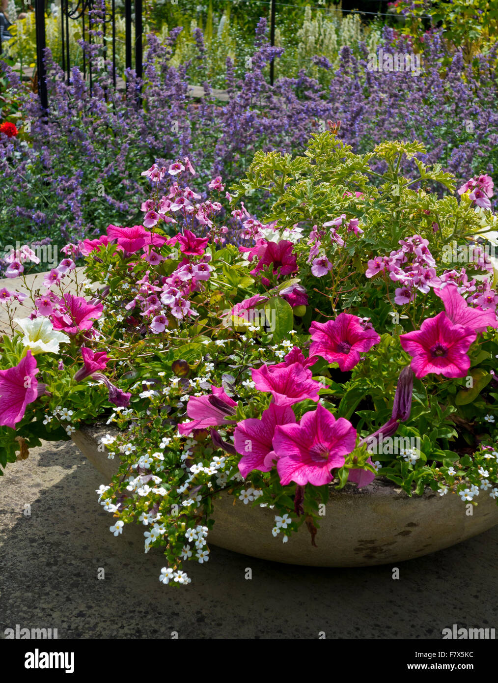 Petunias and other summer flowers growing in a stone urn - Stock Image