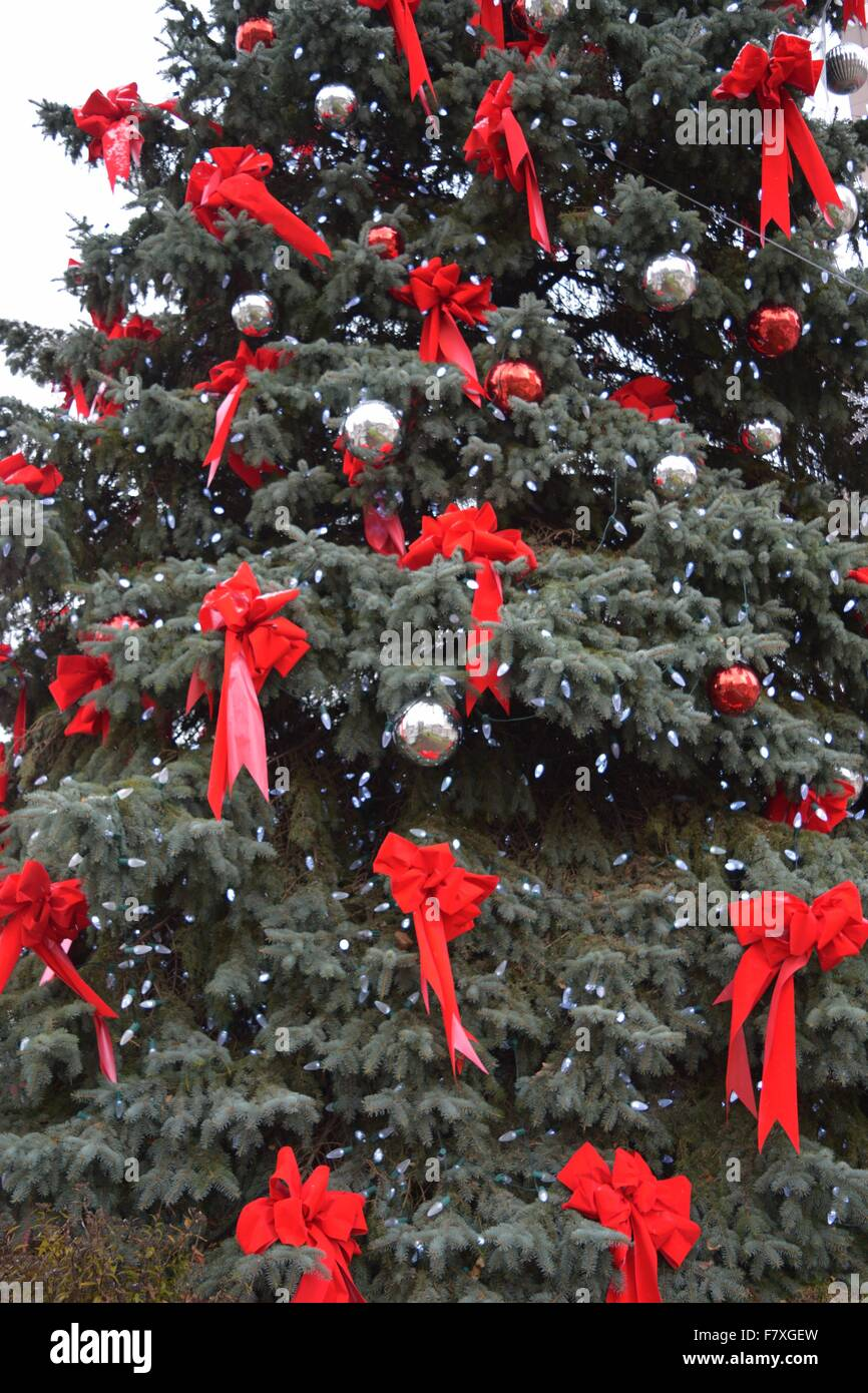 Christmas tree with red bows - Stock Image
