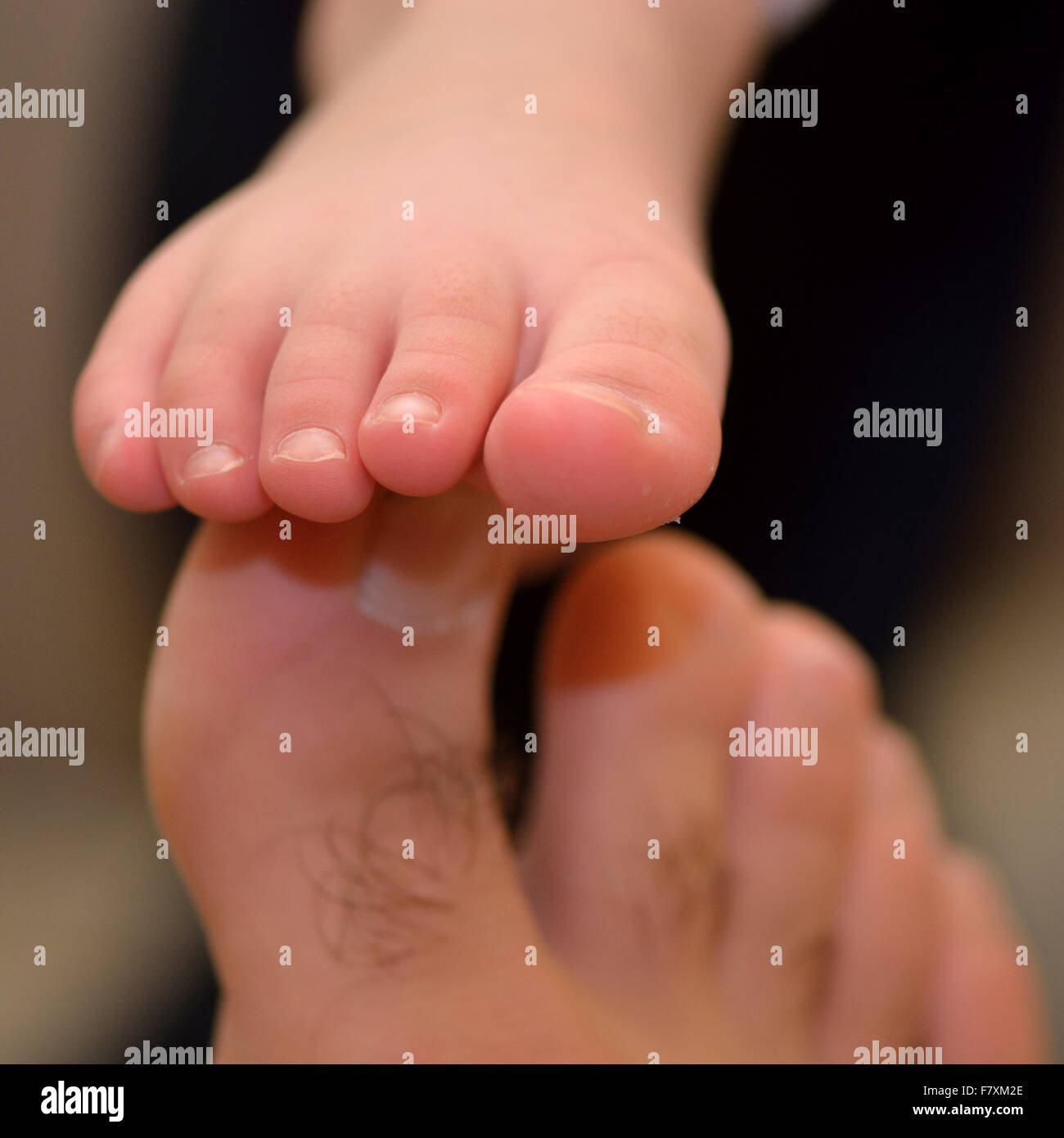 Father and child's feet touching, showing comparison of size - Stock Image