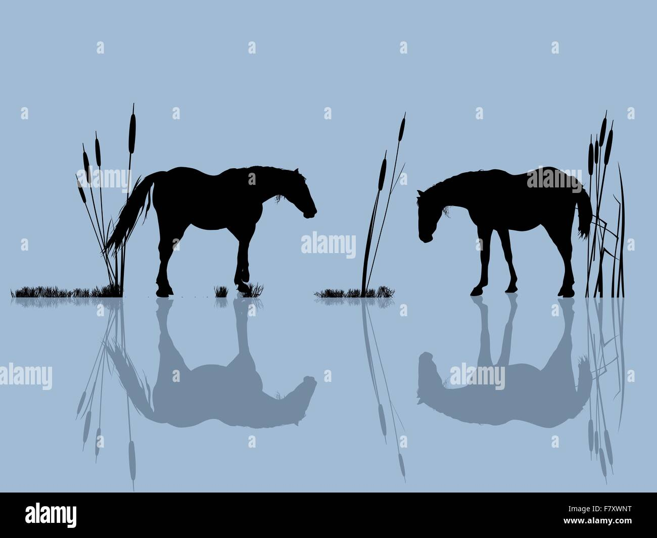 Horses at the water - Stock Image