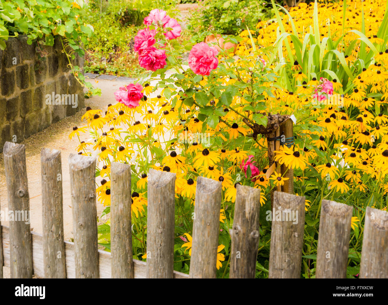 Flower garden behind a wooden fence - Stock Image