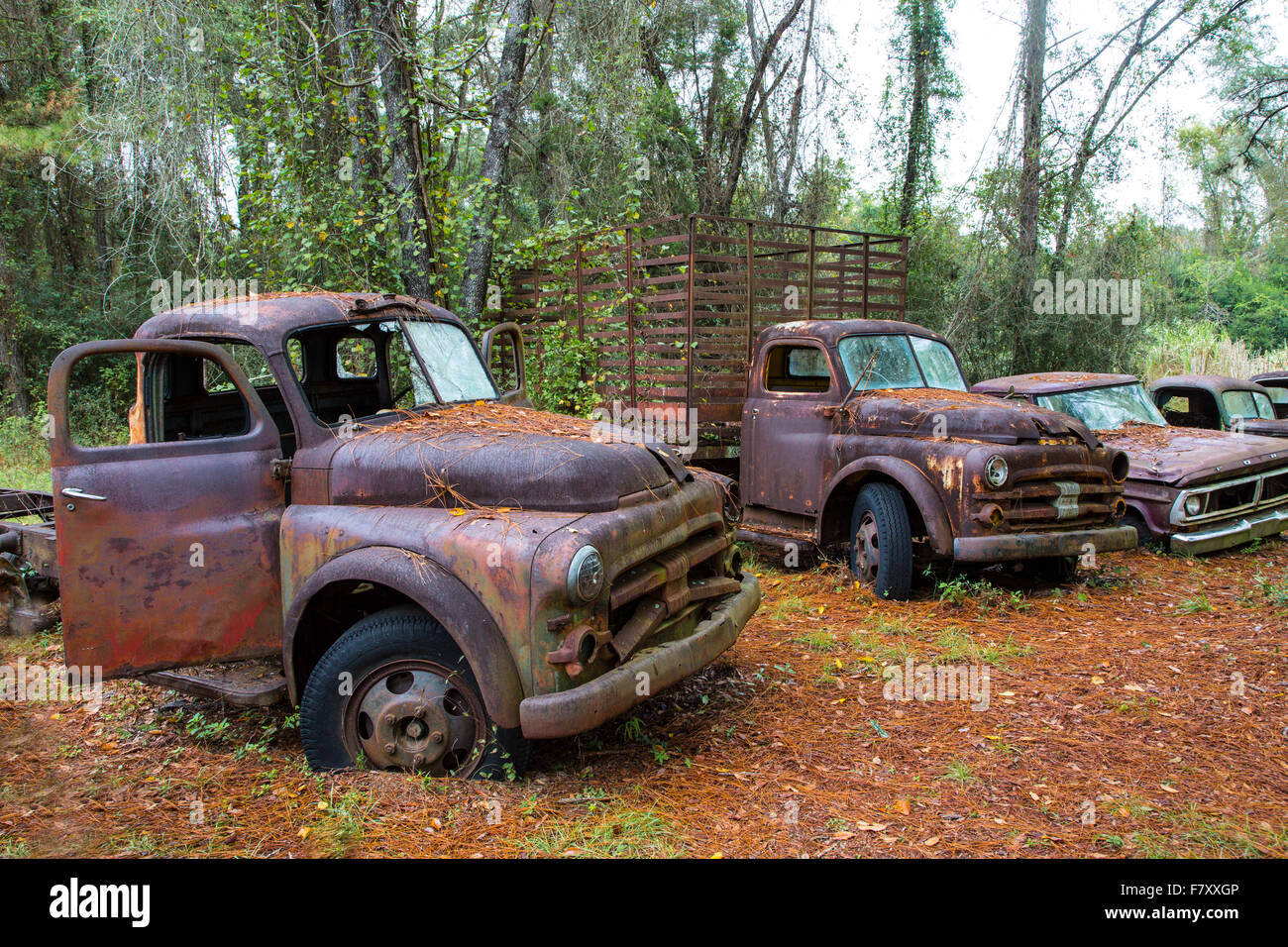 Old rusted abandoned trucks and cars - Stock Image