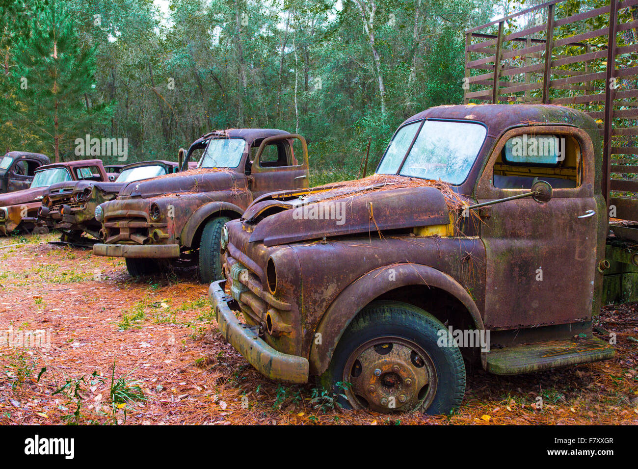 Old rusted abandoned trucks and cars Stock Photo: 90946039 - Alamy