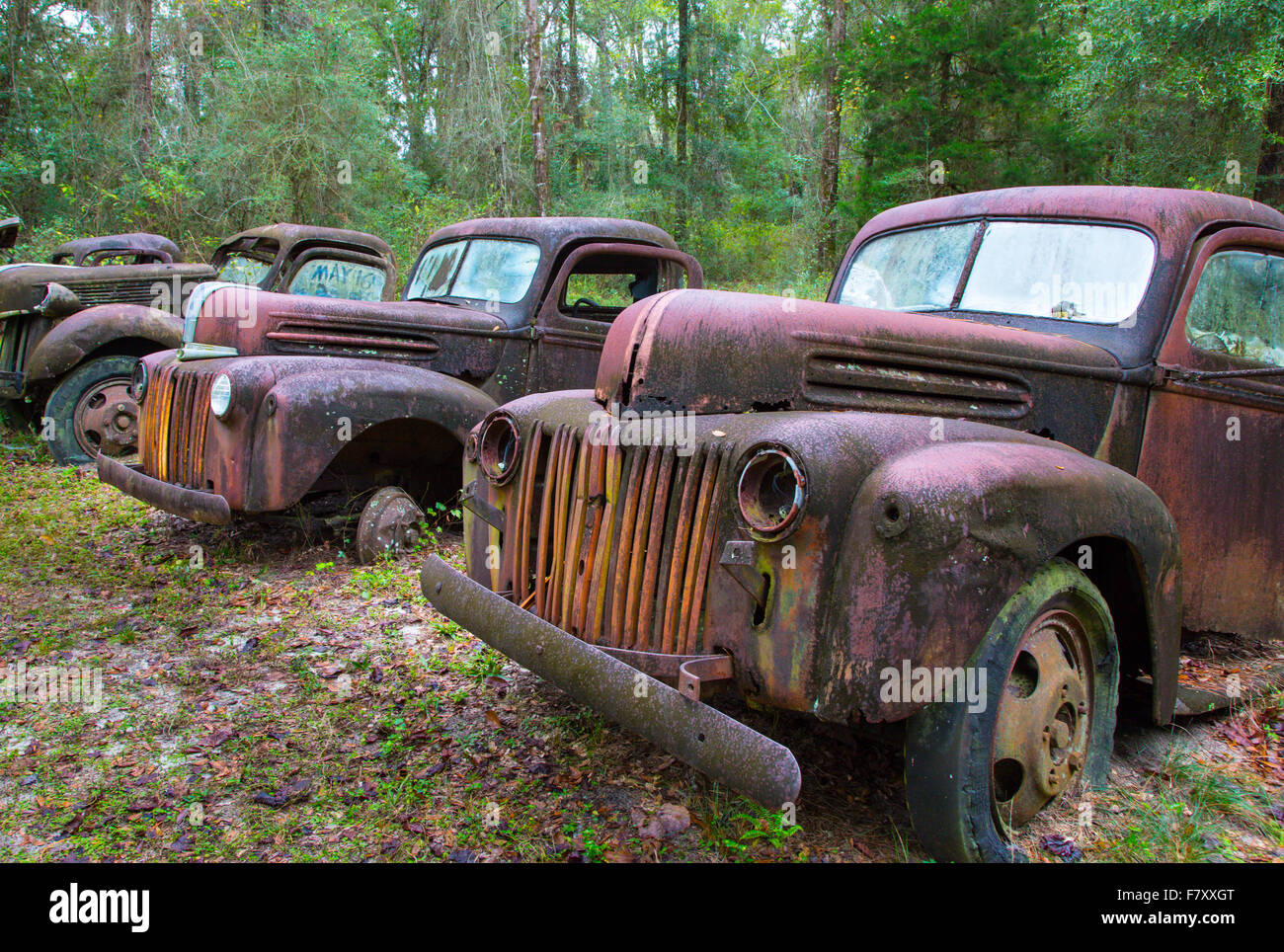 Old rusted abandoned trucks and cars Stock Photo: 90946040 - Alamy