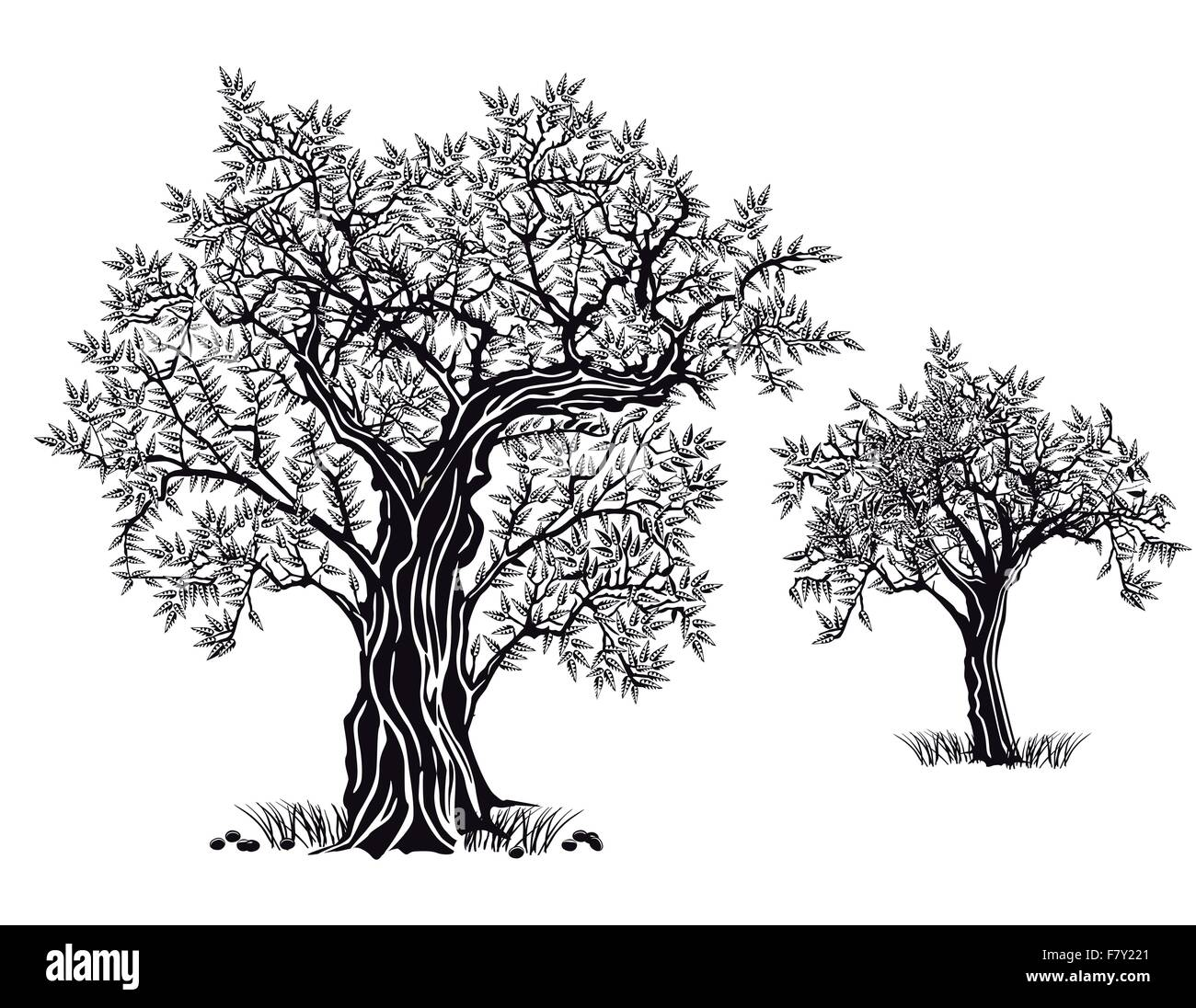 olive trees - Stock Vector