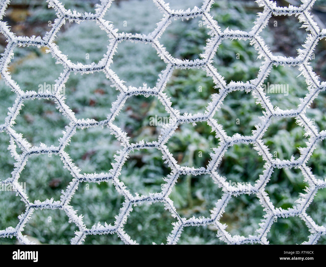 Chicken Wire Stock Photos & Chicken Wire Stock Images - Page 2 - Alamy