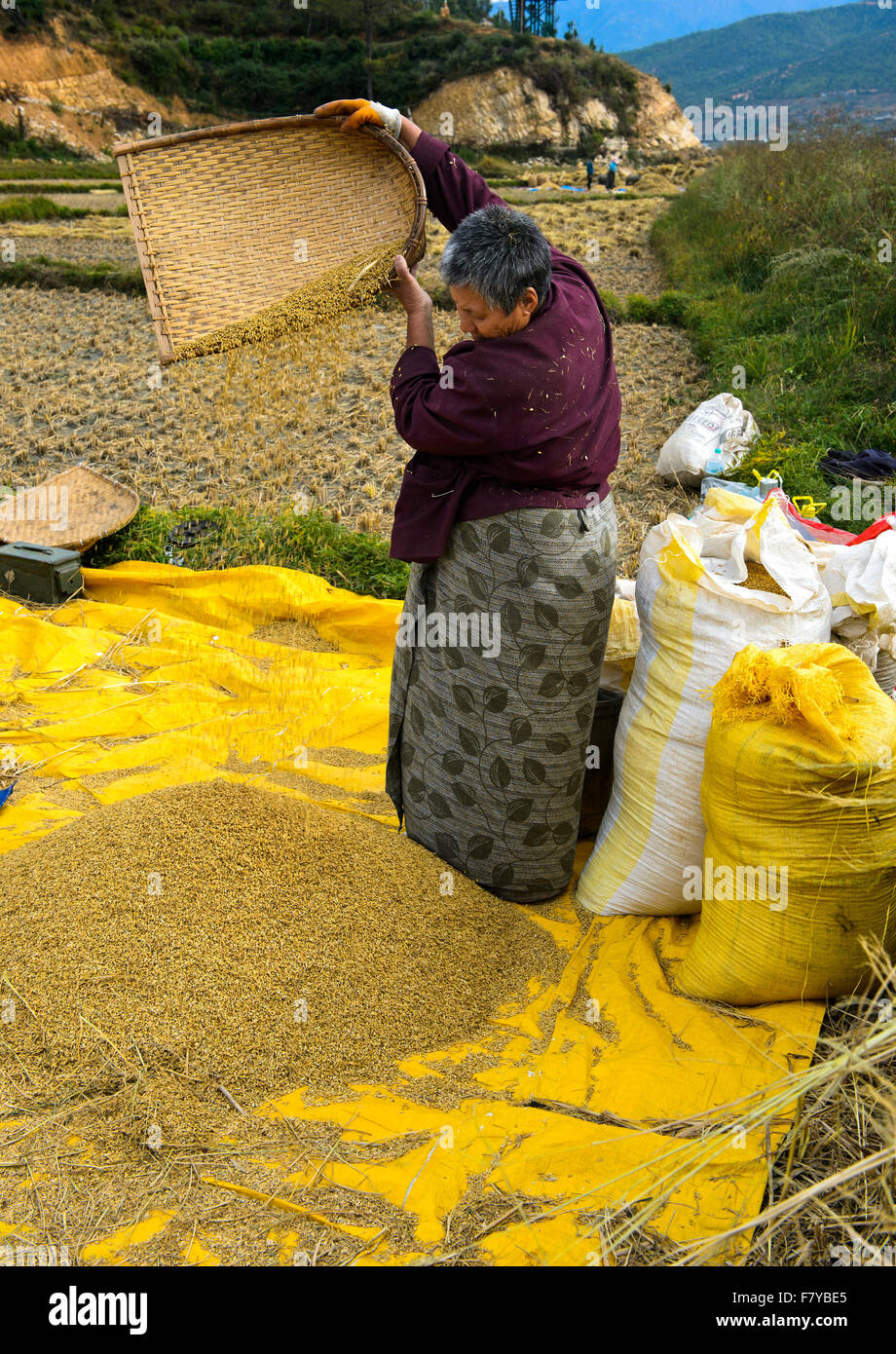 Bhutanese woman separating chaff from rice, Paro, Bhutan Stock Photo