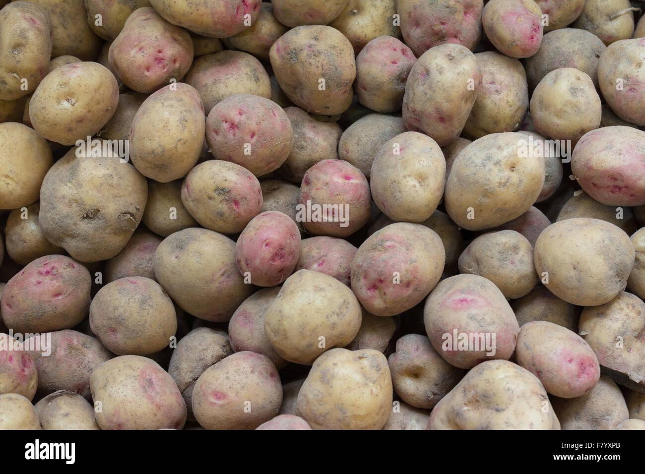 red wrinkled potatoes - raw canarian wrinkly potatoes - papas arrugadas - Stock Image