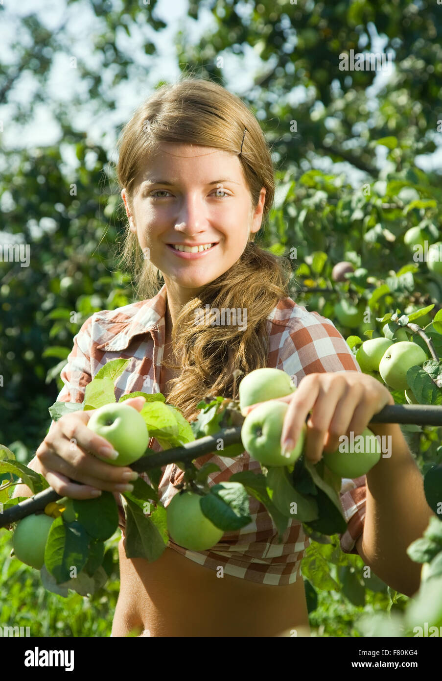 young girl is picking of apples in the orchard stock image