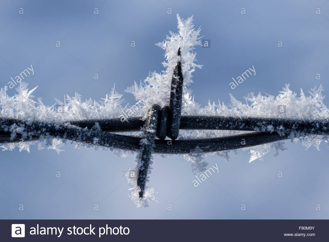 Close up of hoar frost on a barbed wire fence, Wallowa Valley, Oregon. - Stock Image