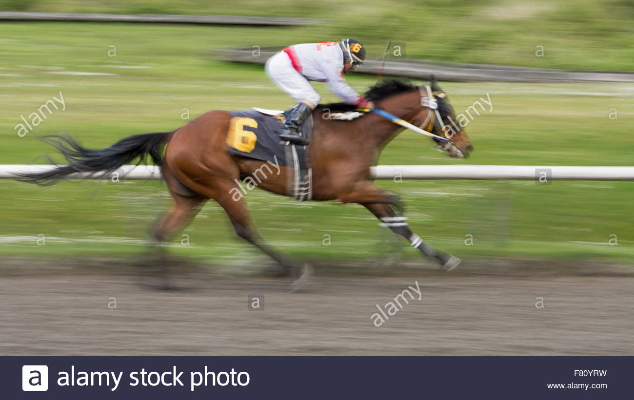 A jockey and his horse racing towards the finish line. Panned with a slow shutter speed of 1/40 second for a sense - Stock Image