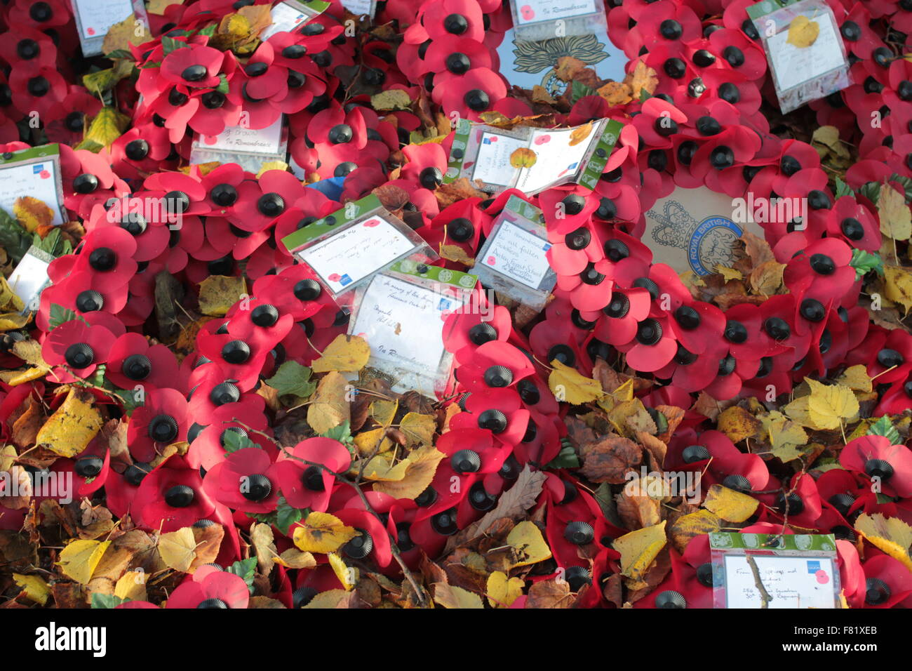 Poppies wreaths in remembrance. - Stock Image