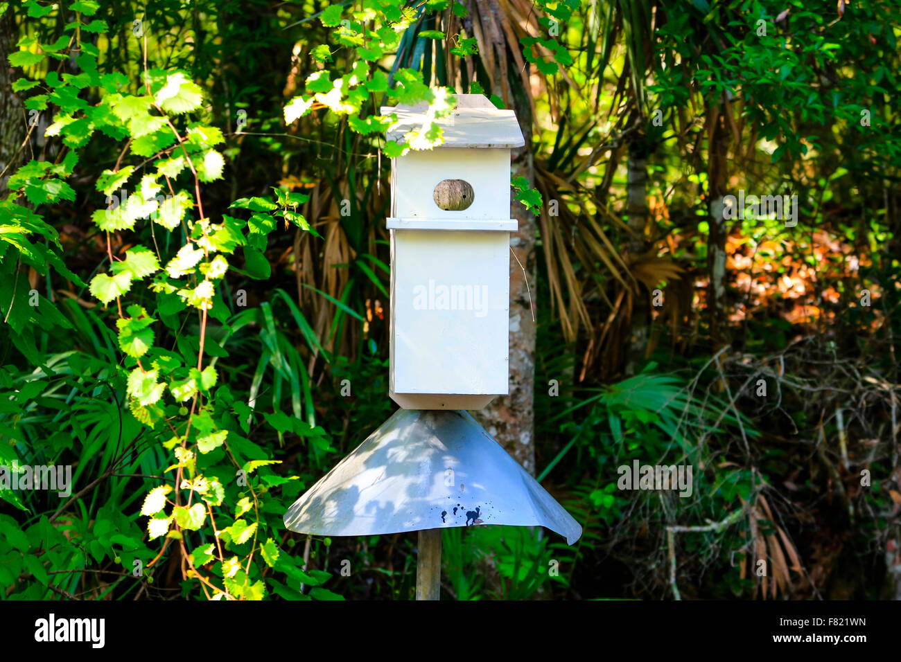 Bird nesting box with an anti-varmint collar seen in the swamps of Florida - Stock Image