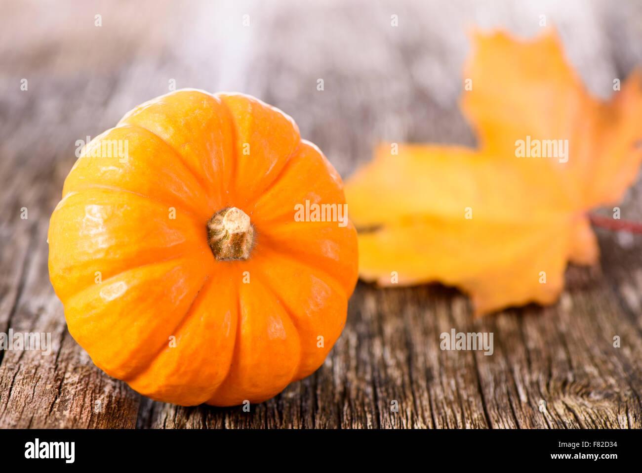 pumpkin fruits as decoration at autumn - Stock Image