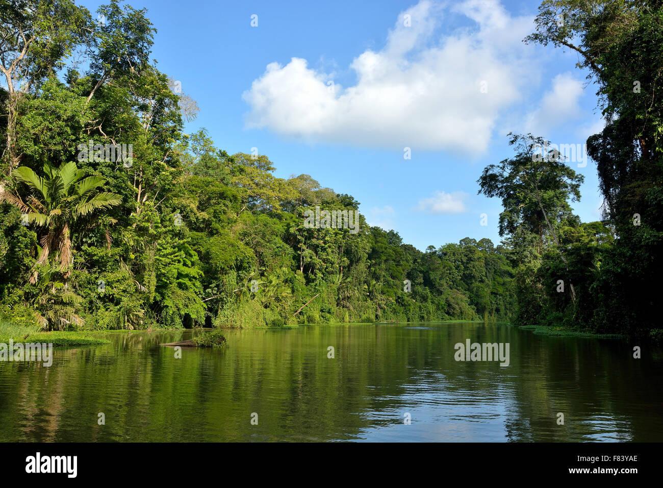Landscape in Tortuguero National Park Costa Rica - Stock Image