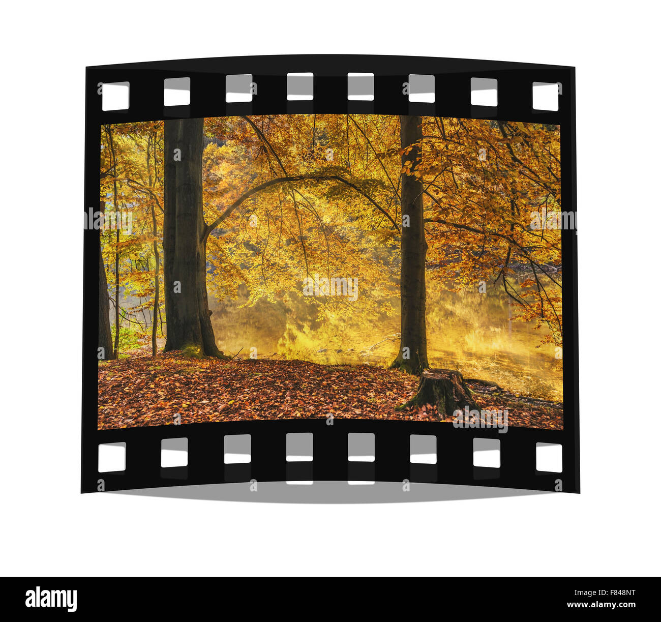 German Forest in the autumn - Stock Image