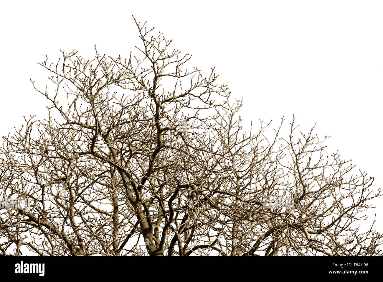 Leafless tree branches with many twigs against a winter sky. - Stock Image