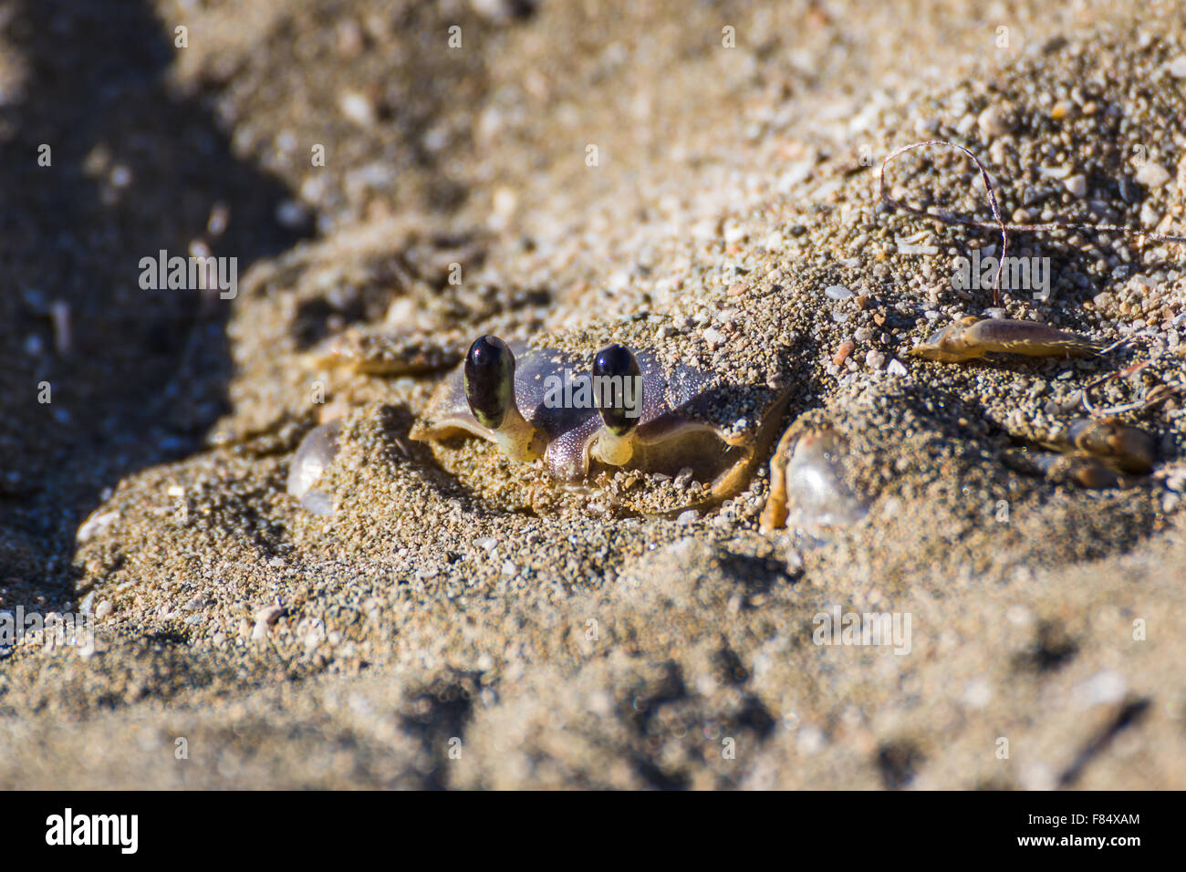 Once I'd passed this crab I crouched down & paused as I waited for him to surface from his instantly made - Stock Image