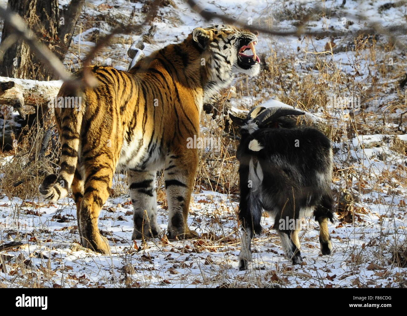 Safari Park in Shkotovo: a corner of unity with nature 68