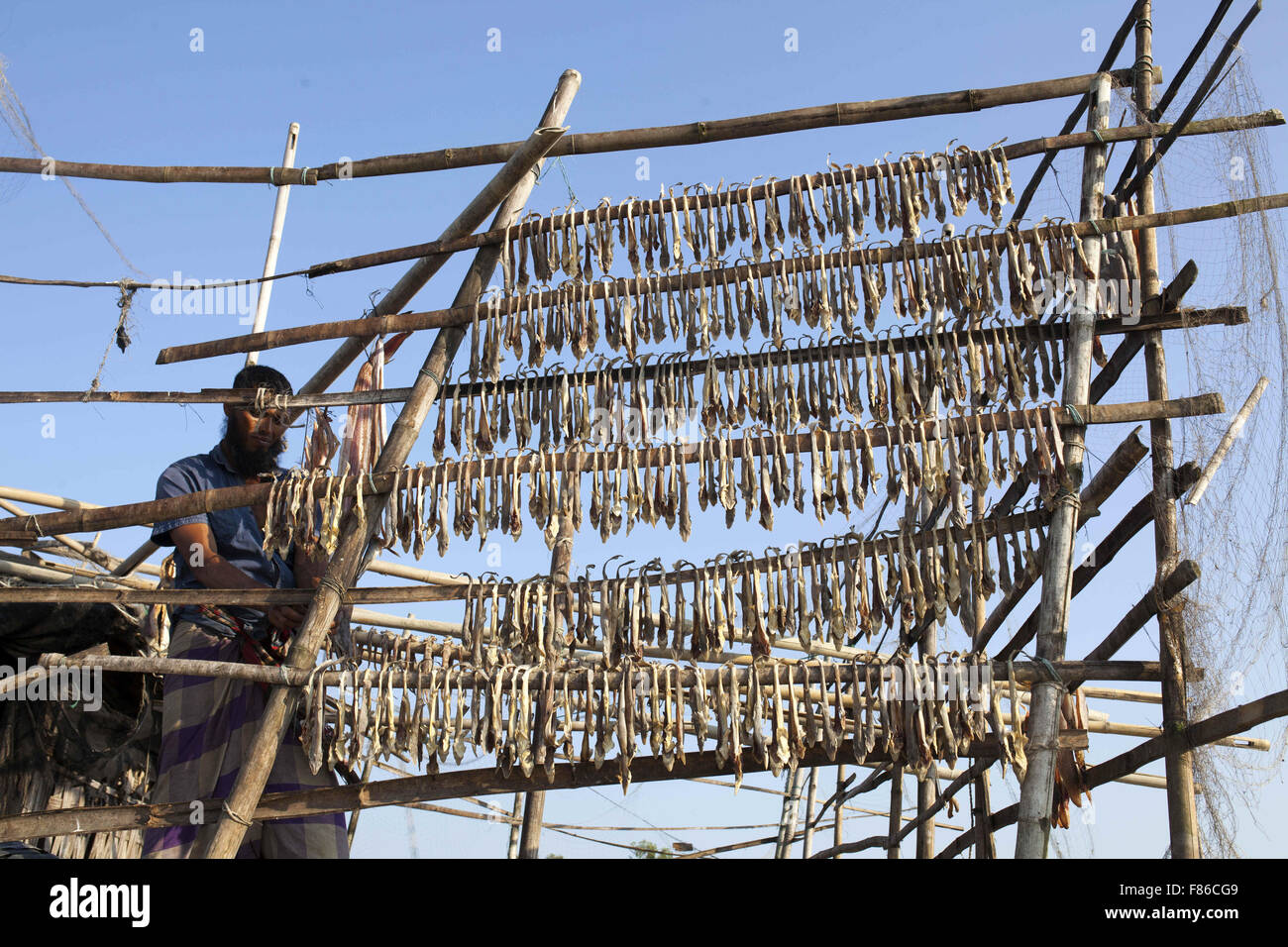 Nov. 29, 2015 - Cox'S Bazar, Bangladesh - COX's BAZAR, BANGLADESH - November 29: Fisher man dryingfish in - Stock Image