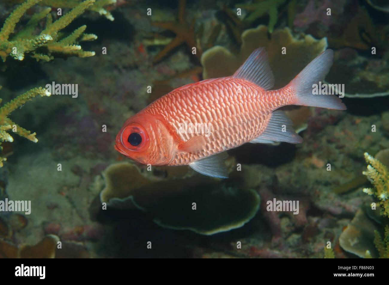 названия рыб с фото южно китайского моря