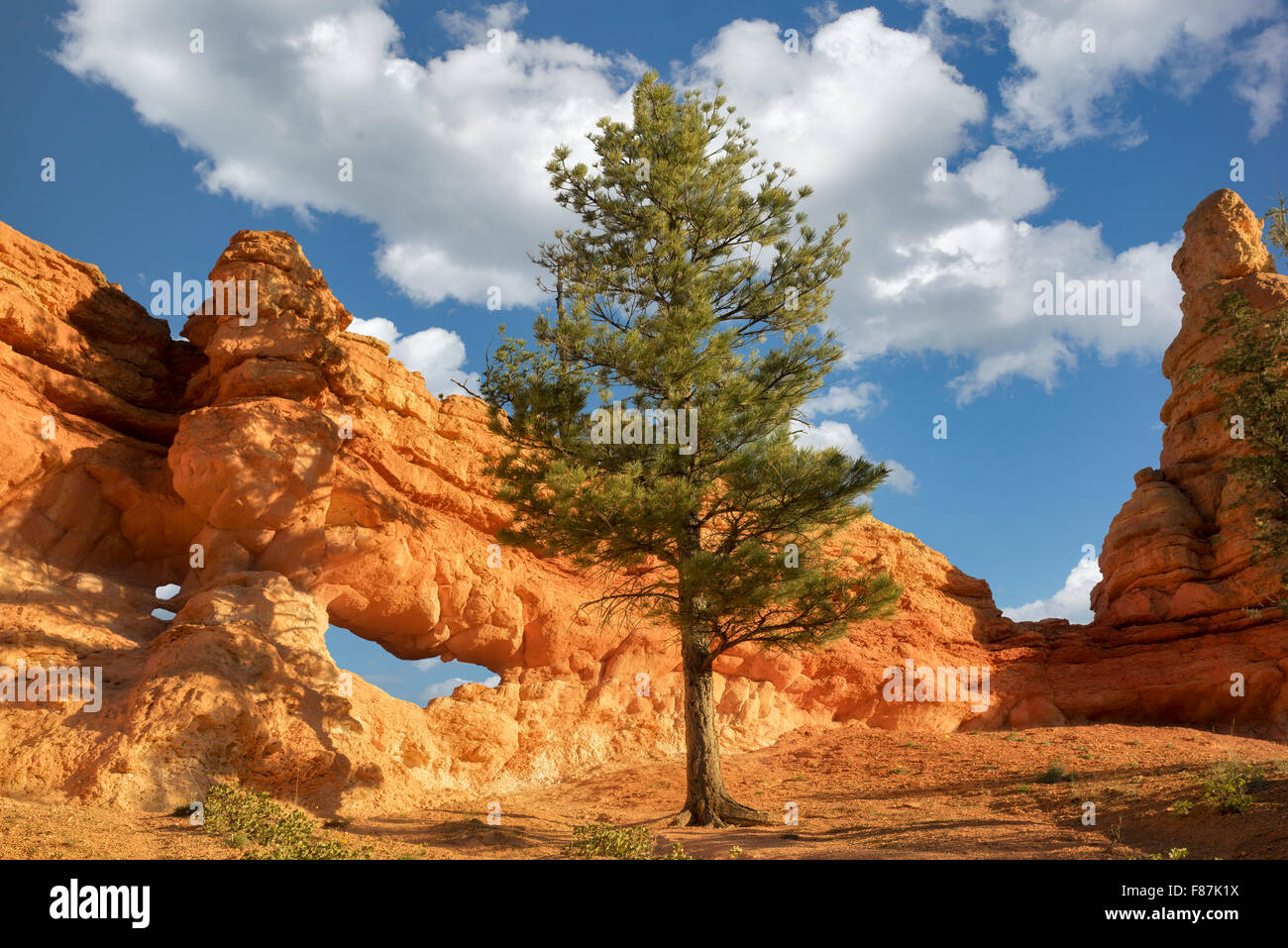 Arches along Mossy Creek Trail. Bryce National Park, Utah - Stock Image