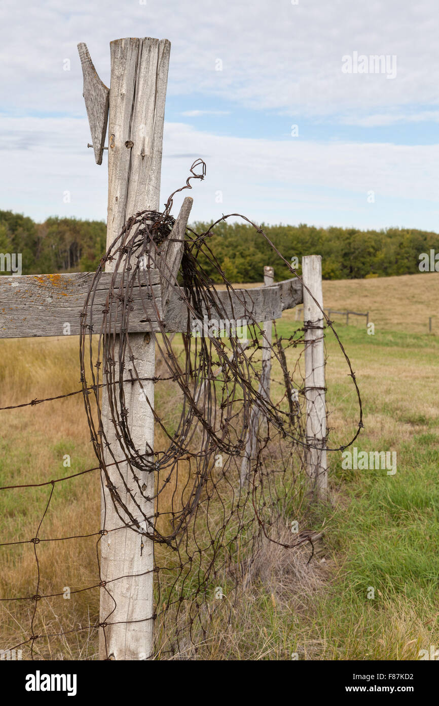 Old barbed wire hanging on the old fence post, rusted and twisted it ...